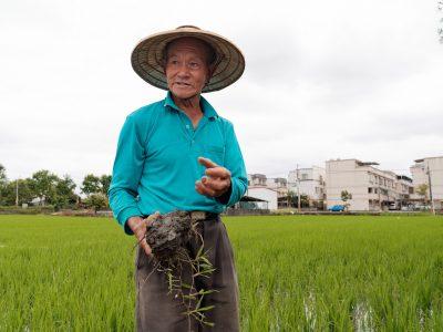 宜蘭員山深溝村老農陳榮昌是在地友善耕作先行者,他關心土壤健康,透過農業廢棄物循環利用的方式照顧土壤。(攝影/王志元)