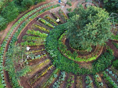 新北市林口臺地土質偏強酸性,不利農耕,卻有一處「紅土森林小宇宙」農場,種植多種蔬果葉菜彷彿沒有障礙。(圖片提供/紅土森林小宇宙)